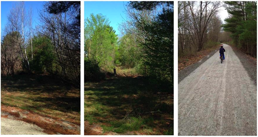 Bagley field trail before and after